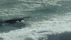 Weddell seals on sea ice in Antarctica