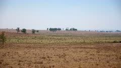 Australia Drought Stock Footage
