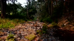 Rainforest Creek, Dry, Drought
