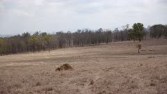 Grazing Land, Dry Season, Drought, Termite Mounds, dying Trees