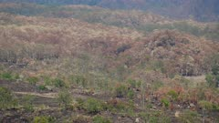 Bushfire burnt areas, Vistas, Cunningham's Gap,