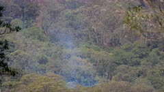 Bushfire aftermath, smouldering, Rainforest Trees, Cunningham's Gap, QLD