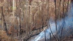 Bushfire aftermath, smouldering, Rainforest, Burnt Palms, Flames, Mt Lindsay