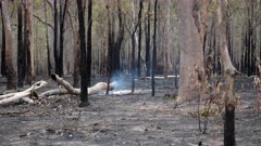 Bushfire aftermath, smouldering, Low Intensity