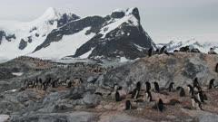 Adelie Penguins, Colony GV, Vista Locator, Yalour Island