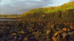 Seaweed, Rocks, Yellow Eyed Penguin Location, Boat POV, Enderby Island