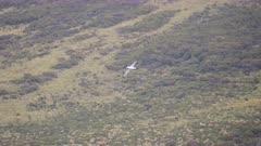 Auckland Islands, Ship-to-shore, GV, Vegetation, Albatross flying, sp unidentified