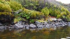 Auckland Islands, Ship-to-shore, GV, Vegetation