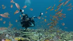 Female underwater photographer and school of tropical fish