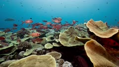 Diverse coral reef and fish community