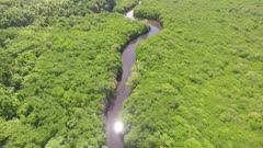 Aerial shot following river through Mangrove forest to the sea