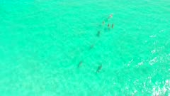 Aerial shot following herd of Dugongs ascends and tilts up allowing herd to swim into the distance