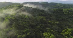 Aerial shot tracking over tropical Jungle at sunrise with mist
