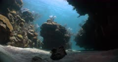 Static shot of typical reef in Bermuda