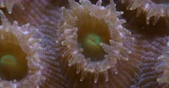 Super macro shot of coral polyp