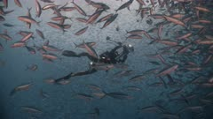 Underwater photographer with thousands of feeding fish