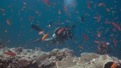 Underwater photographer and bright orange school of fish