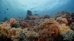 Diverse coral reef with thousands of small red and orange fish swimming and hiding among the corals