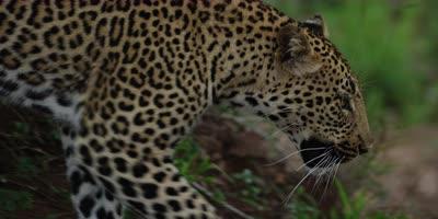 African Wildlife, edited compilation