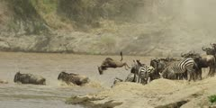 Wildebeest jumping into the Mara River