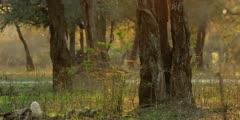 Mana Pools scenic - spider webs in golden light