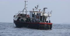 Squid , Calamari Fishing fleet