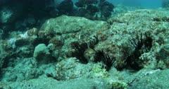 ST Helena Island Scuba Diving on Reefs