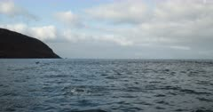 ST Helena Island Dolphins swimming past
