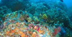 Colourful reef of Eastern Cape South Africa