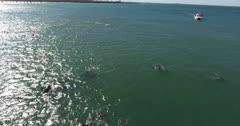 Aerial-Superpod of Indian Ocean Bottlenose Dolphins patrolling the coast line of Port Elizabeth, Nelson Mandela Bay, Eastern Cape, South Africa