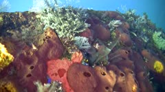 USAT Liberty Wreck in Tulamben. It is covered in sponges, soft and hard coral, hydrozoan and much more.