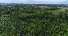 Drone footage of the northern part of Kampot, Cambodia. The camera is going over a swamp cover with nipa palm trees.