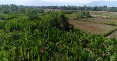 Drone footage of the northern part of Kampot, Cambodia. The camera is starting low over a swamp cover with nipa palm trees and is ascending going over dried rice fields towards the Praek Tuek Chhu river.