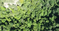 Drone footage of Wetar island with its luxuriant tropical vegetation and rocky hills. The camera is facing down at the forest and is going over the trees while tilting up showing the hills.