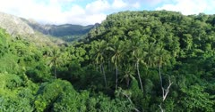 Drone footage of Wetar island with its luxuriant tropical vegetation and rocky hills. The camera is starting going over a few coconut trees before going inland towards the forest covering the island.