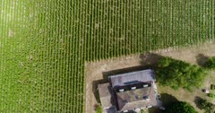 Drone footage of a house surrounded by a big vineyard in Bourdigny near Geneva. The camera is facing down at birdview angle and is going along the grape field.
