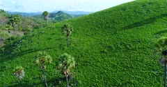 Drone footage of bright green grassy hill with palm trees growing on it and island landscape in the background in the north of Labuan Bajo, Flores. The camera is starting behind the hill and is going sideway while panning.