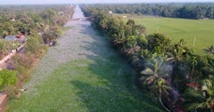 Drone footage of field of common water hyacinths, Eichhornia crassipes, invading a canal of water along a highway near Alappuzha, Kerala, India. The camera is facing down at the flower field and is going over it until a bridge where the flower field ends.