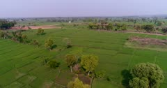 Drone footage of countryside near Mysore, Karnataka, India, with the bright green rice fields at various stage growing along the Kaveri river, trees are scattered around and a small white temple is in the background. The camera is going over the fields towards the temple.