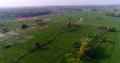 Drone footage of countryside near Mysore, Karnataka, India, with a small white temple in the middle of bright green rice fields at various stage growing along the Kaveri river, trees are scattered around. The camera is going over the fields turning around the temple.