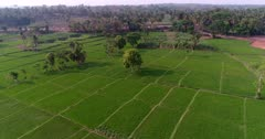 Drone footage of countryside near Mysore, Karnataka, India, with the bright green rice fields at various stage growing along the Kaveri river, trees are scattered around them. The camera is going sideway over the fields while descending.