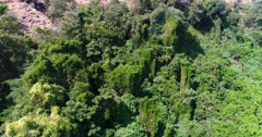 Drone footage of Sangeang island, Indonesia with its volcanic ground scattered with small trees and bushes, an area is covered by plant. The camera is facing the trees and is ascending straight.