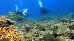Diving footage of pristine coral reef with a field of various hard and soft coral, many different colorful fishes and two diver swimming, Alor Island, Indonesia. The camera is going backward while slowly panning.