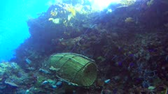 Diving footage of a fish trap made of bamboo on top of the reef, Alor Island, Indonesia. The camera is going over the reef towards the cage.