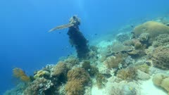 Underwater footage of sandy area with patches of pristine various hard and soft coral and different fishes swimming over it, Komodo National Park, Indonesia. The camera is going towards a vertical coral post with a table coral on top while turning.