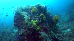 Underwater footage of boulder full of colorful soft coral and various sponges with different tropical fishes swimming around it. The camera is going away while turning.