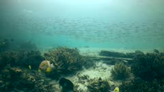 Underwater footage of huge group of yellostripe scad (Selaroides leptolepis) swimming on sandy reef with hard and soft coral patches. The camera is going over the reef while panning.
