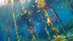 Underwater footage of jetty with wooden posts and colorful soft coral growing on them, groups of sergeantfishes, drummers and much more are swimming in between. The camera is going towards the posts while turning.