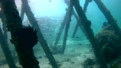 Underwater footage of jetty with wooden posts and huge group of fusiliers swimming in between. The camera is panning along the jetty.