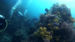 Underwater footage of pristine soft coral bommie with many bright colors and divers swimming at the bottom. The camera is going sideway while turning.